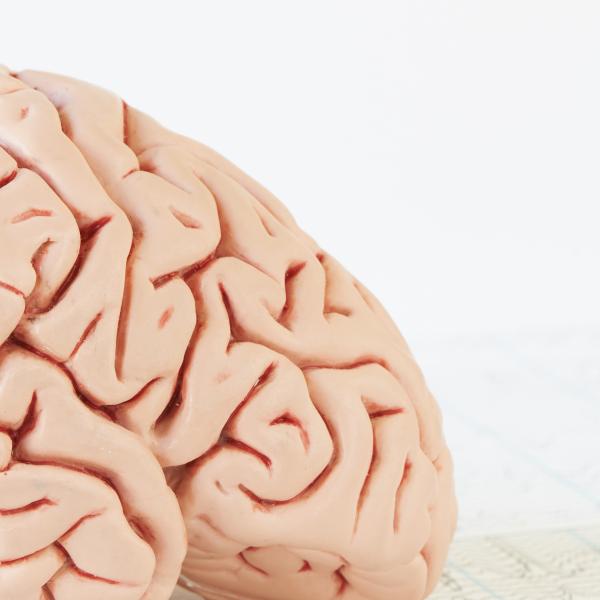 Pick my brain sessie Parmois Marketing & Communicatie